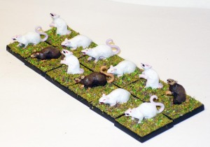 150315 rats